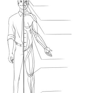 Chapter1_Illust3_Anatomy